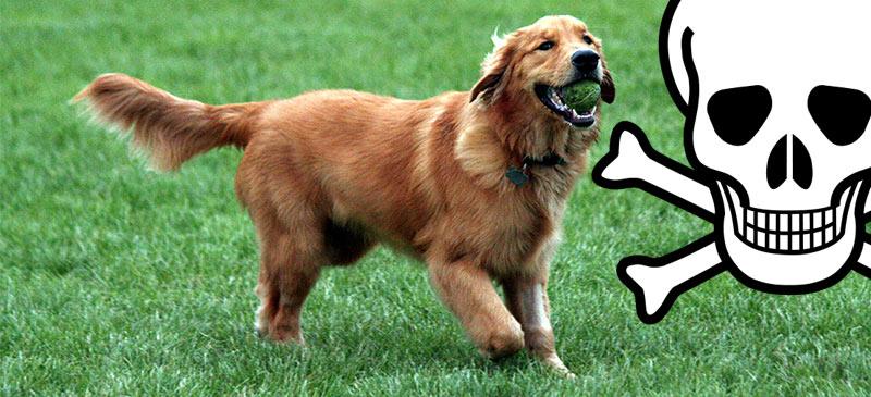 Hundehalter rund um die Rungenberghalde werden von der Polizei zur Vorsicht aufgerufen. Offenbar wurden vergiftete Hundeköder ausgelegt.
