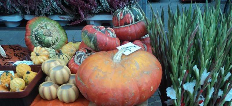 In der Gelsenkirchener Innenstadt findet heute, 4.Oktober 2015 wieder der inzwischen bekannte und beliebte Bauernmarkt mit verkaufsoffenen Sonntag statt.